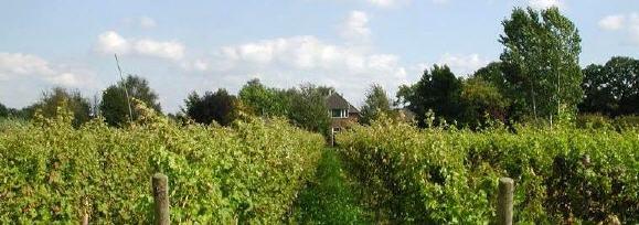 Wijnboerderij 't Heekenbroek in Drempt