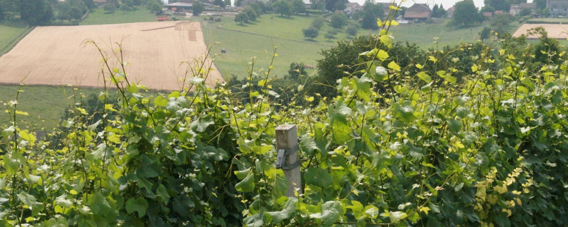 wijngaardsberg.jpg